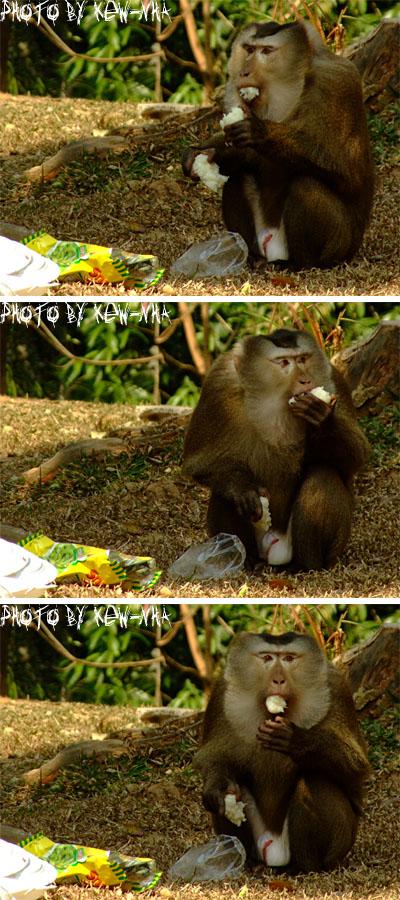 monkeykhao-yai-02.jpg