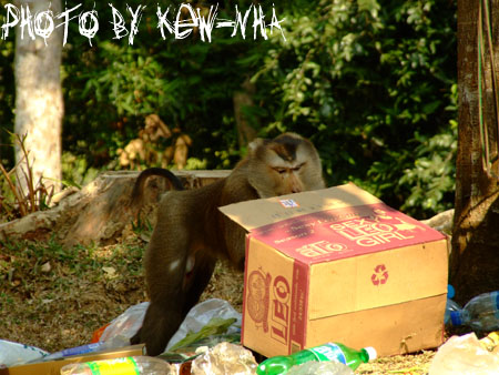 monkeykhao-yai-04.jpg