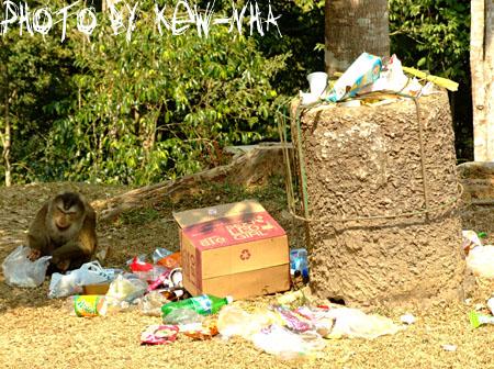 monkeykhao-yai-05.jpg