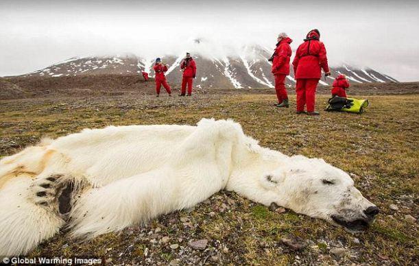 polar bear01